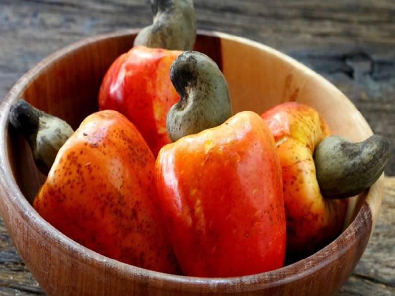 Caju é fonte de vitamina essencial para combater infecções e aumentar a imunidade