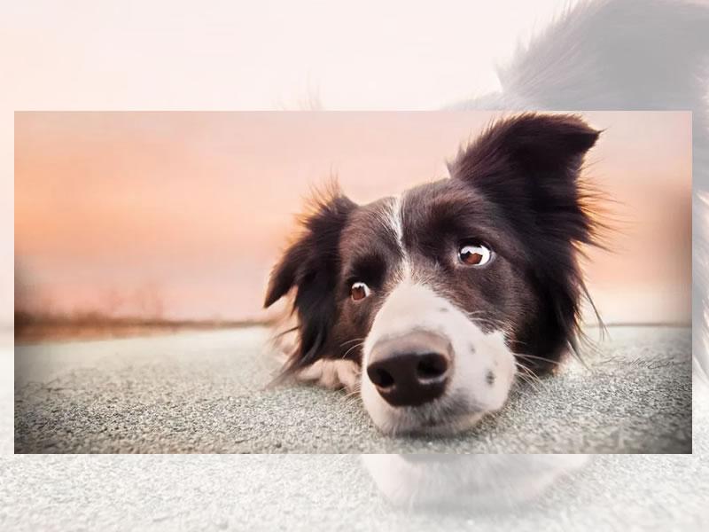 Vantagens de castrar seu cachorro
