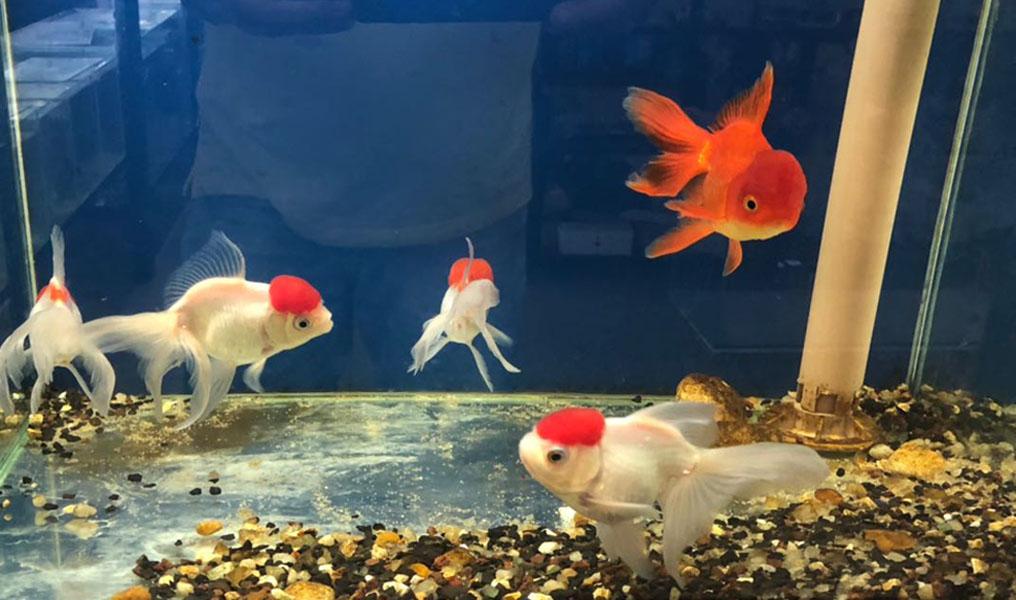 Aquarismo cresce e ganha novos adeptos em Alfenas