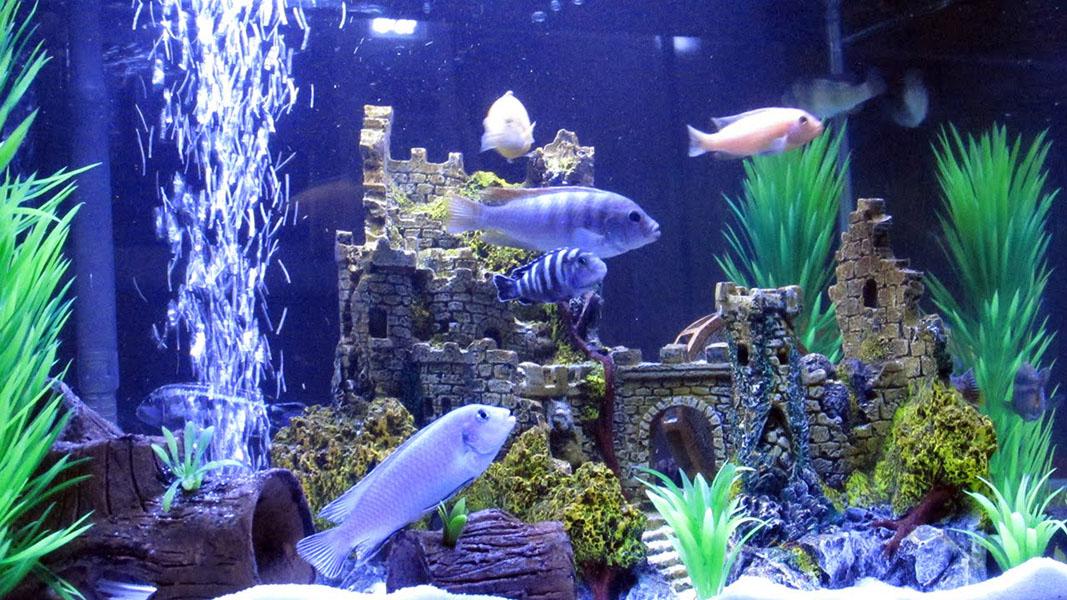 Confira como escolher o aquário ideal