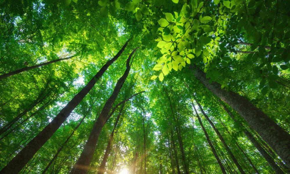 Política ambiental de Bolsonaro preocupa Alemanha