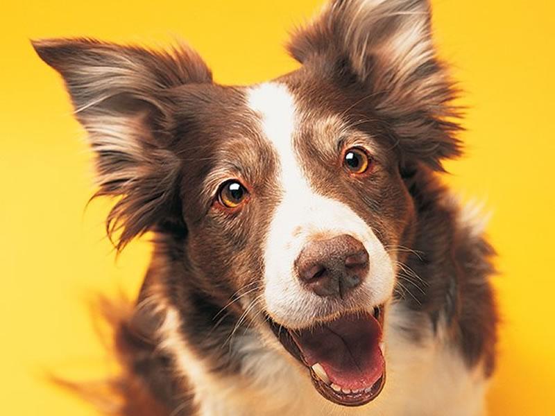 /17805vidaanimal1201_cachorro-sorrindo.jpg