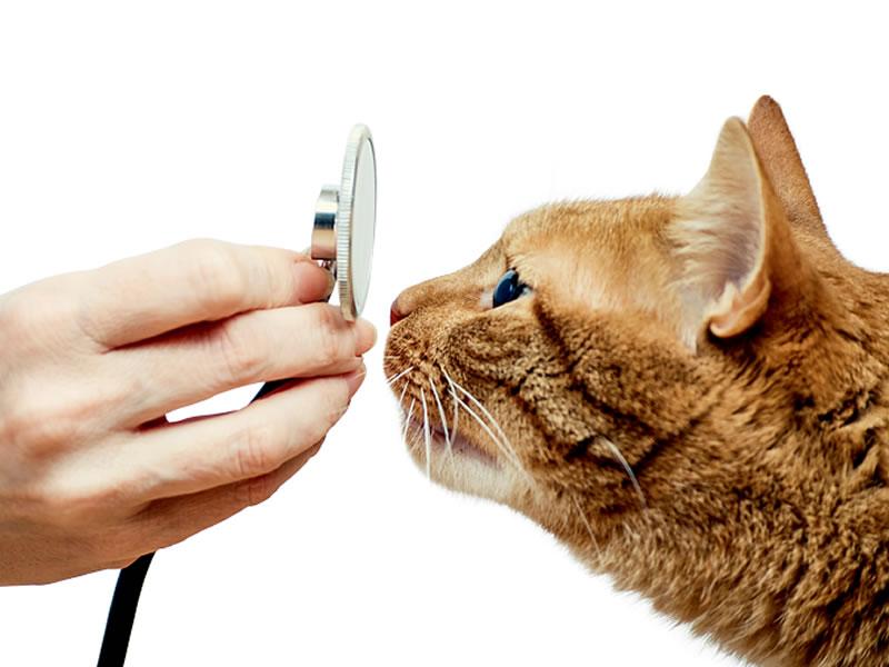 Brasil ganha hospital exclusivo para gatos