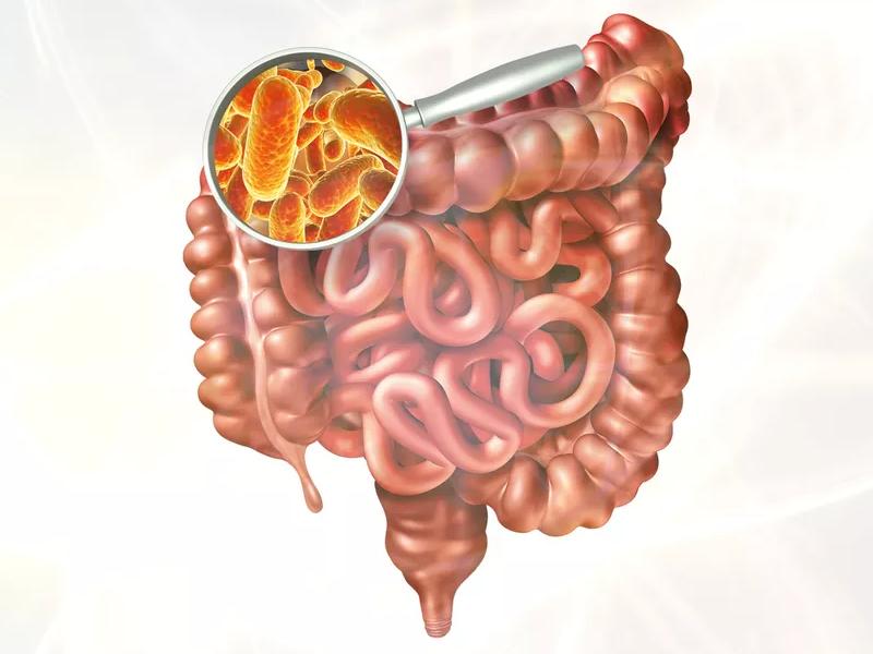 O poder que o seu intestino tem sobre sua saúde e até seu comportamento